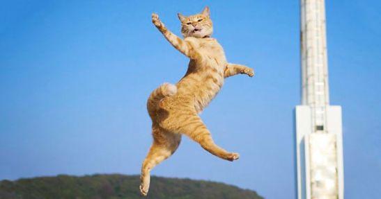 funny-dancing-cats-fb3-png__700.jpg
